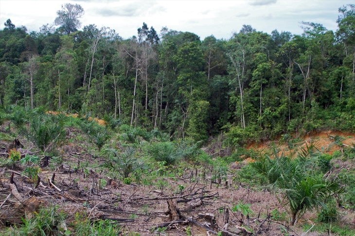 Forest_cleared_CIFOR_Indonesia_Iddy_Farmer.jpg