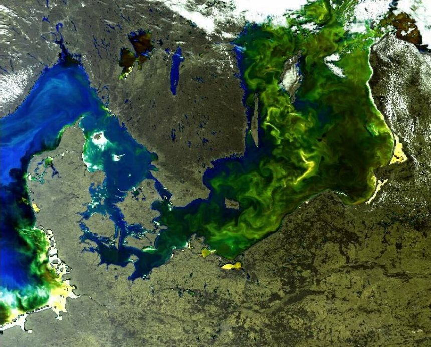 Satellite image: An algal bloom in the Baltic Sea.