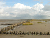 Sediments in the Wadden Sea and seafloors of the North Sea coast have many functions within the marine ecosystem. For example, the sediments filter pollutants out of the water.