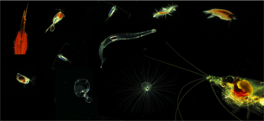 161207 Zooplankton-observatorium Samples