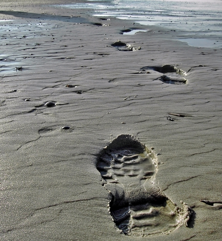 Antropogenic footprint in the Wadden Sea (Photo: Ina Frings, HZG)